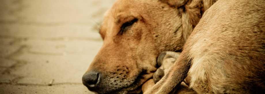 se voluntario y ayuda a los animales