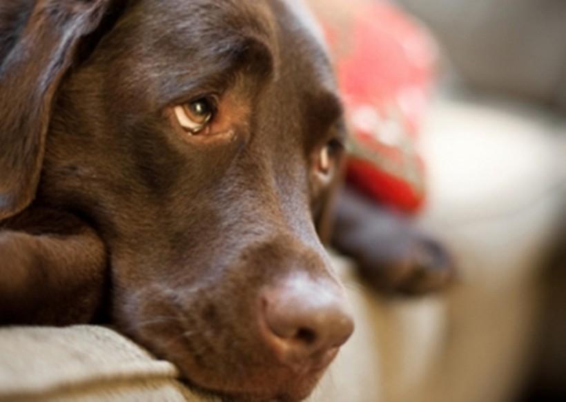 07-perros-cataratas-380x270