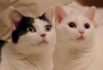 Dos-gatos
