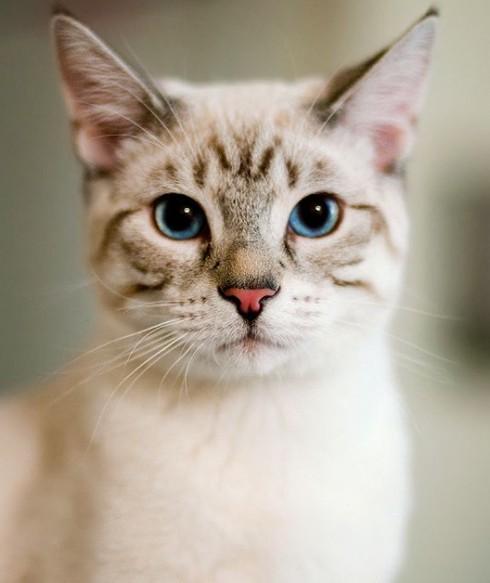 gato pinterest