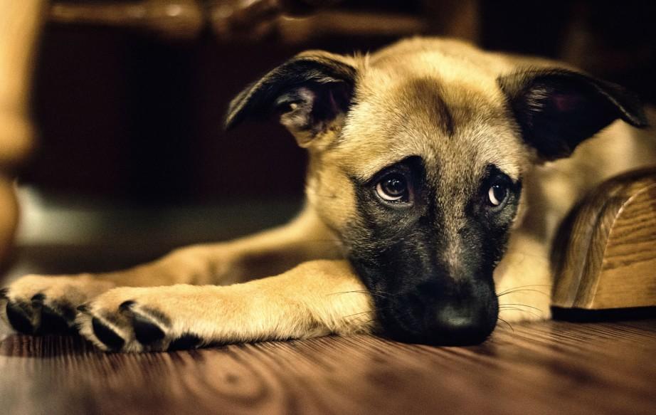 perrito-triste
