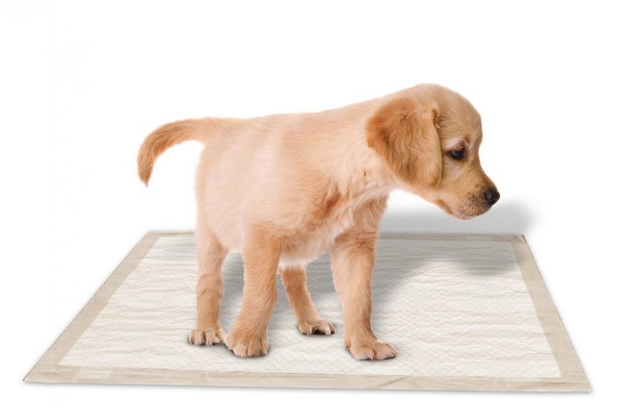 higiene cachorro. Paño higiénico