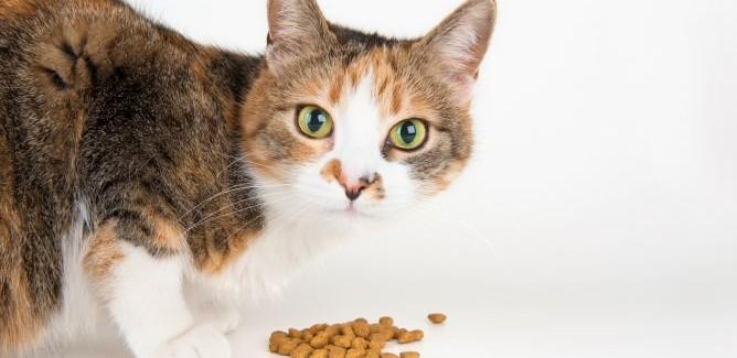 alimentacion-gatos-adultos--esterilizar-xl-668x400x80xX-668x325