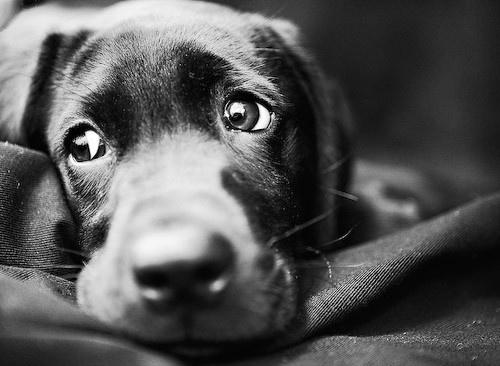 perro triste con dolor