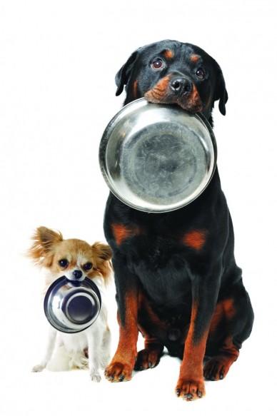 perros alimentación