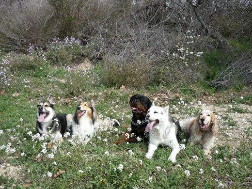 perros de Laura Establés Gracia