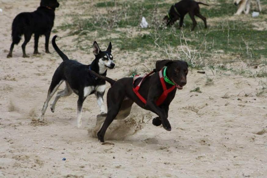 Perros de Noelia Gil Menor