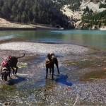 Perros en el lago de la Vall de Nuria. De Noelia Gil Menor