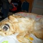 El otro perrito de Villy Vigil Maroto