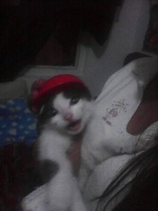 gatito de Maria Fernanda Álvarez Ballesteros