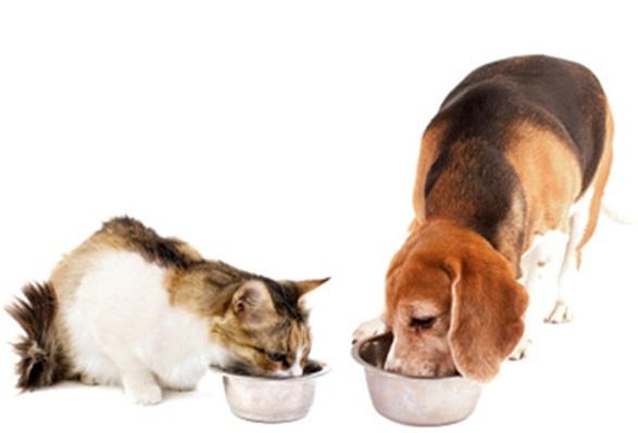 perro-gato-comiendo alimentación