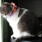 Kitty de Aileen Patricia Pereira