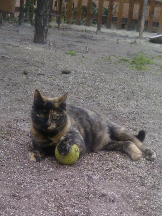 Mini Miau de Elena