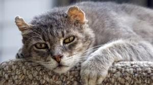 gato senior