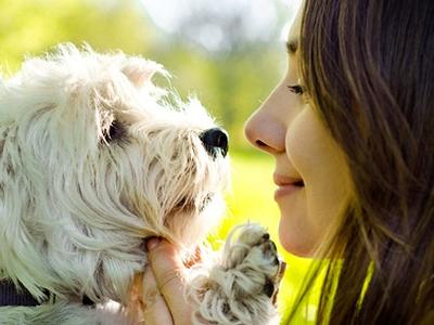 perro humano cuidados