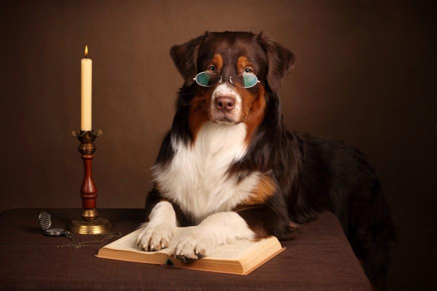 perro-concurso-disfruta-libros
