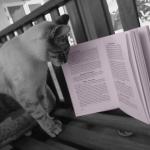 El gato de Sofía Tejero