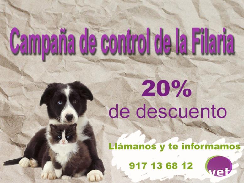 campaña filaria